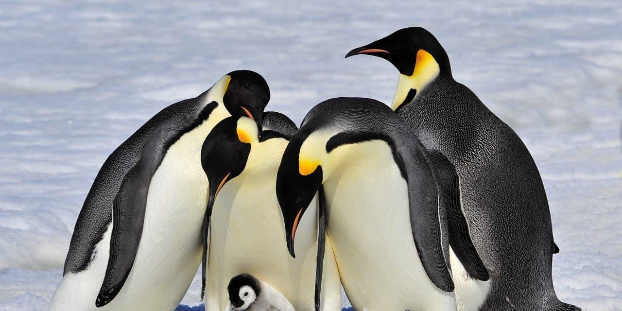 https://mytravelxp.com/wp-content/uploads/2021/03/antarctica-penguins-family-istock-493217930-vladsilver-2048x1366web-1280x640.jpg