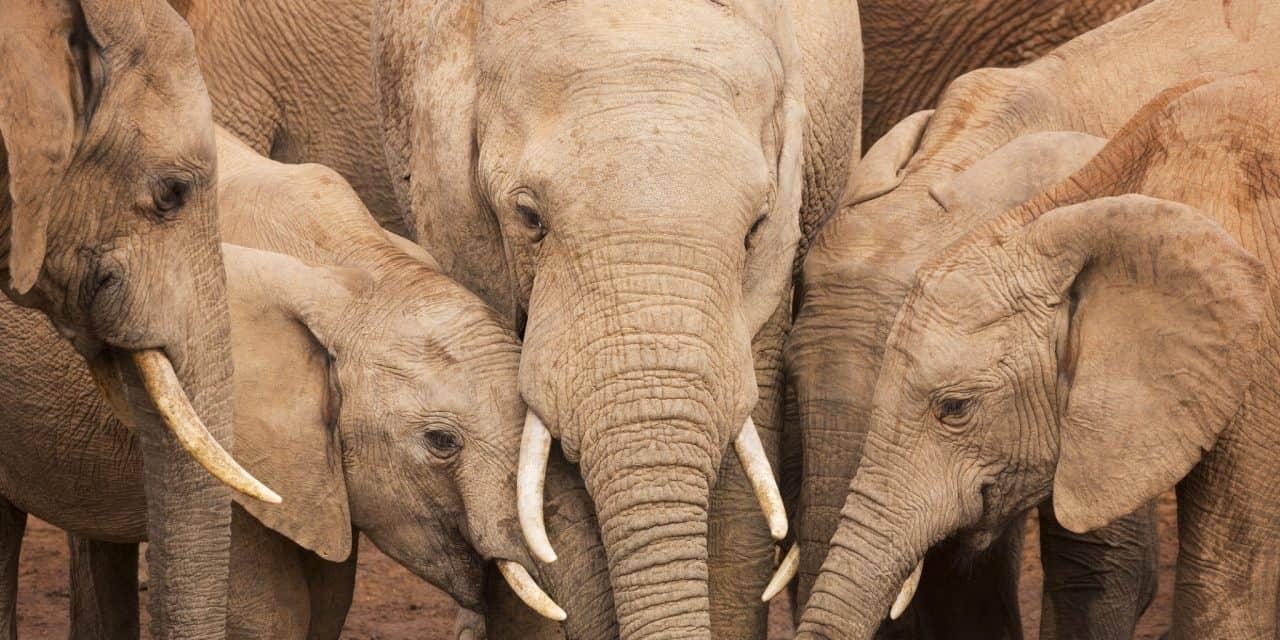 https://mytravelxp.com/wp-content/uploads/2021/03/south-africa-elephants-istock-635870878-sara-winter-2048x1366web-1280x640.jpg
