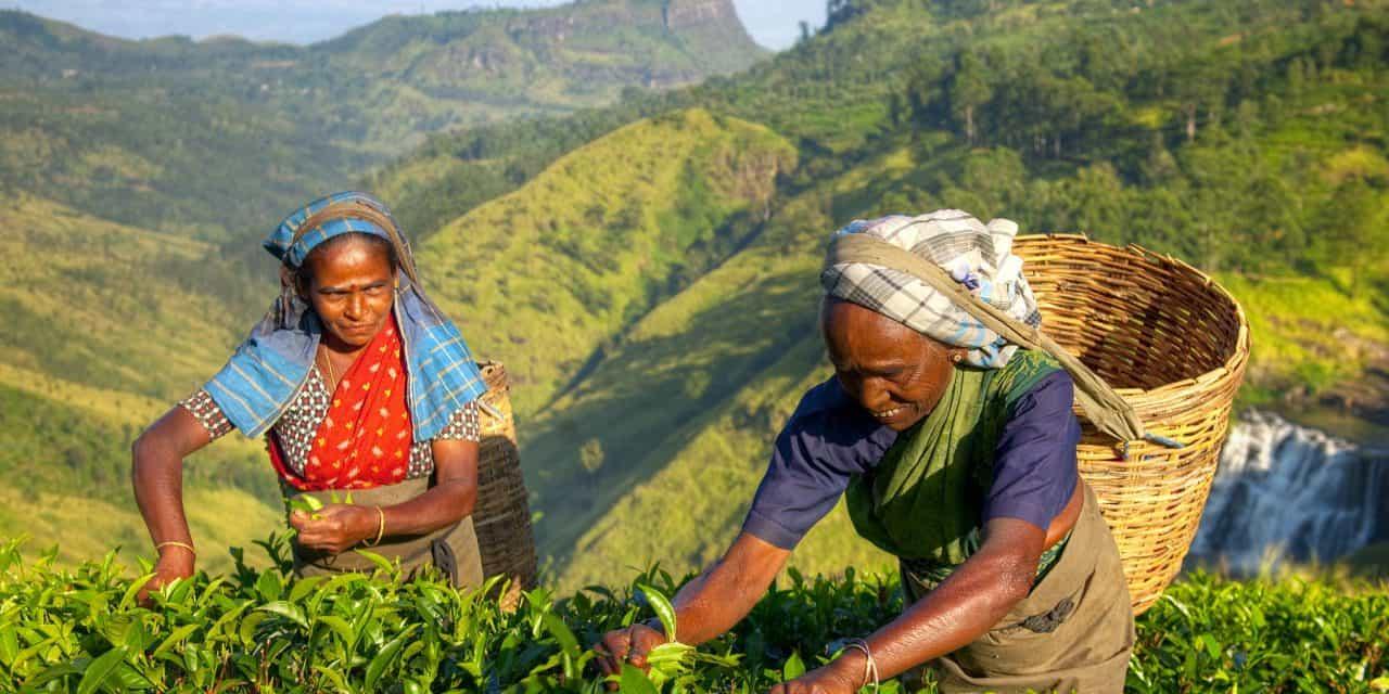 https://mytravelxp.com/wp-content/uploads/2021/03/sri-lanka-tea-plantation-istock-862152836-rawpixel-2048x1366web-1280x640.jpg