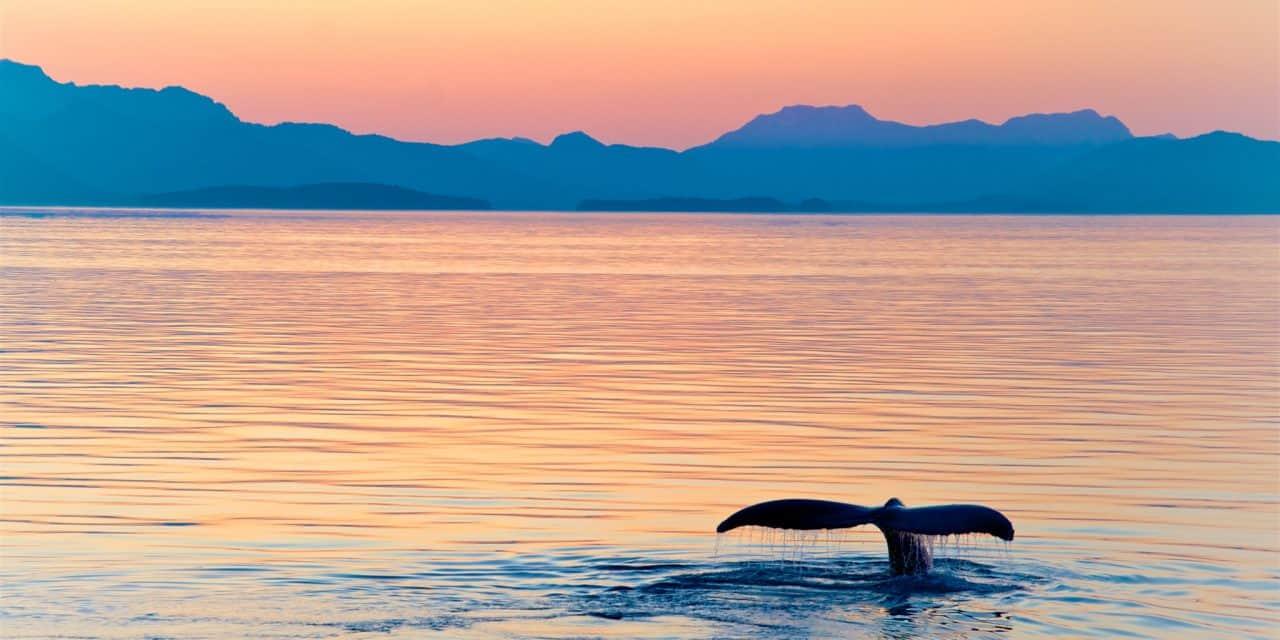 https://mytravelxp.com/wp-content/uploads/2021/05/alaska-whale-sunset-tonyzhao120-istock-1219467096-2048x1366web-1280x640.jpg