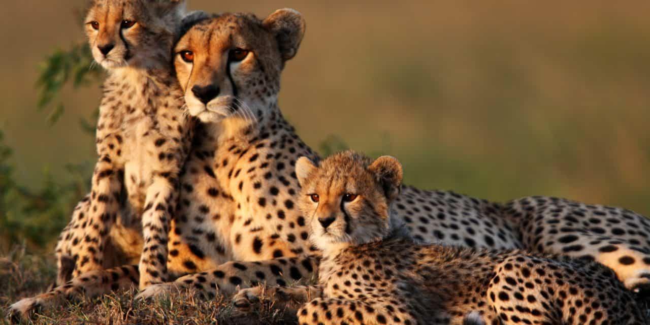 https://mytravelxp.com/wp-content/uploads/2021/06/kenya-cheetah-cuba-masai-mara-iStock-167768212-GP232-2048x1365-1-1280x640.jpg